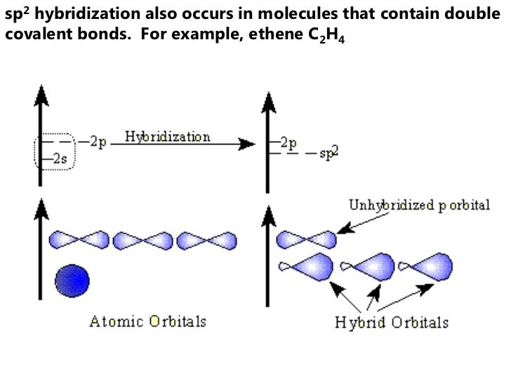 sp2 hybridization also occurs in molecules that contain doublecovalent bonds. For example, ethene C2H4