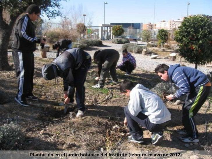 Plantación en el jardín botánico del Instituto (febrero-marzo de 2012)