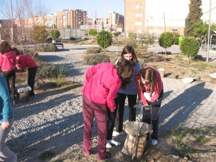 2012 03 06 estudiando rocas en el jardin
