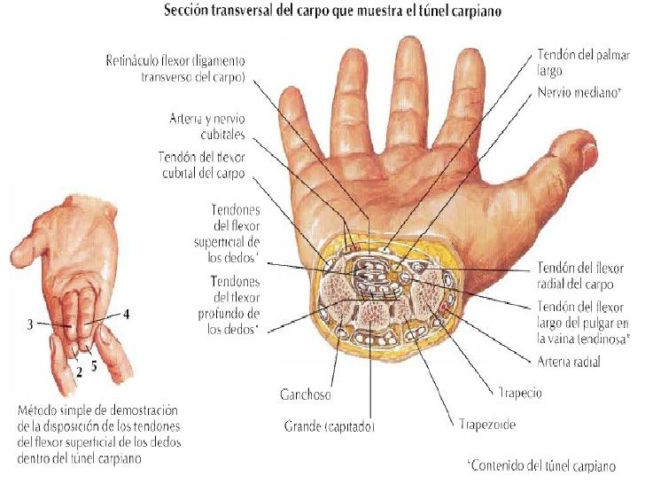 2012-04-11)Mano y muñeca-patologia y exploración