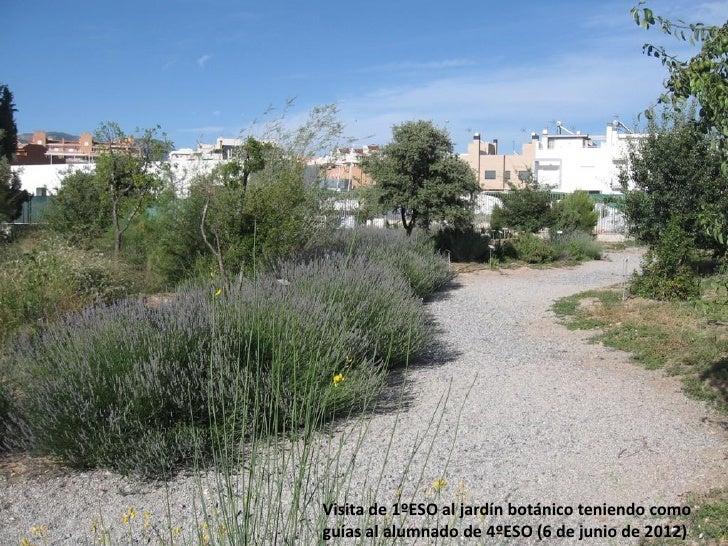Visita de 1ºESO al jardín botánico teniendo comoguías al alumnado de 4ºESO (6 de junio de 2012)