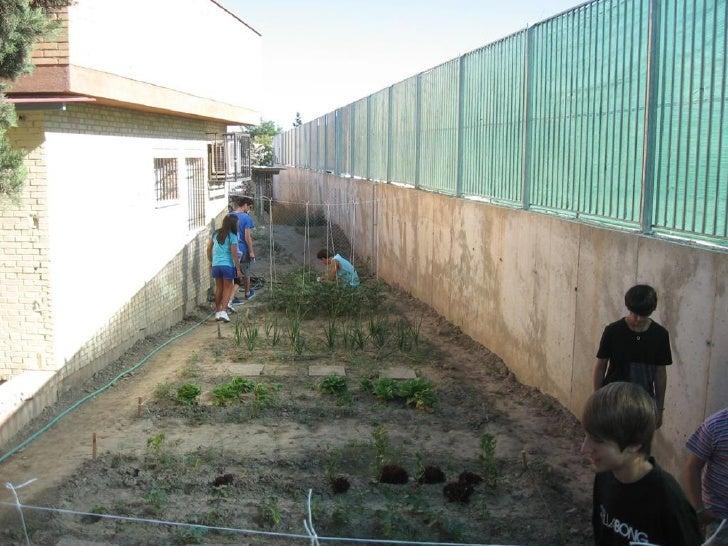 2012 06 cosecha huerto escolar