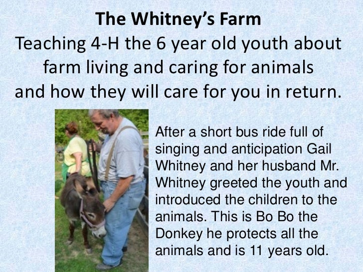 The Whitney's FarmTeaching 4-H the 6 year old youth about   farm living and caring for animalsand how they will care for y...
