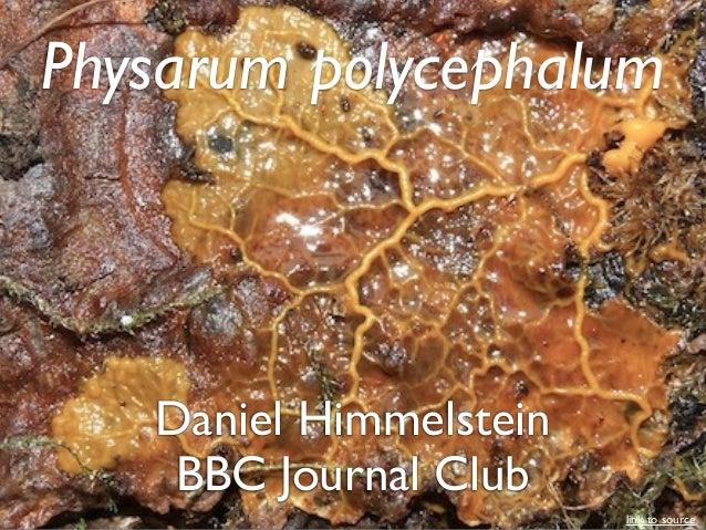 Daniel Himmelstein Physarum polycephalum BBC Journal Club link to source