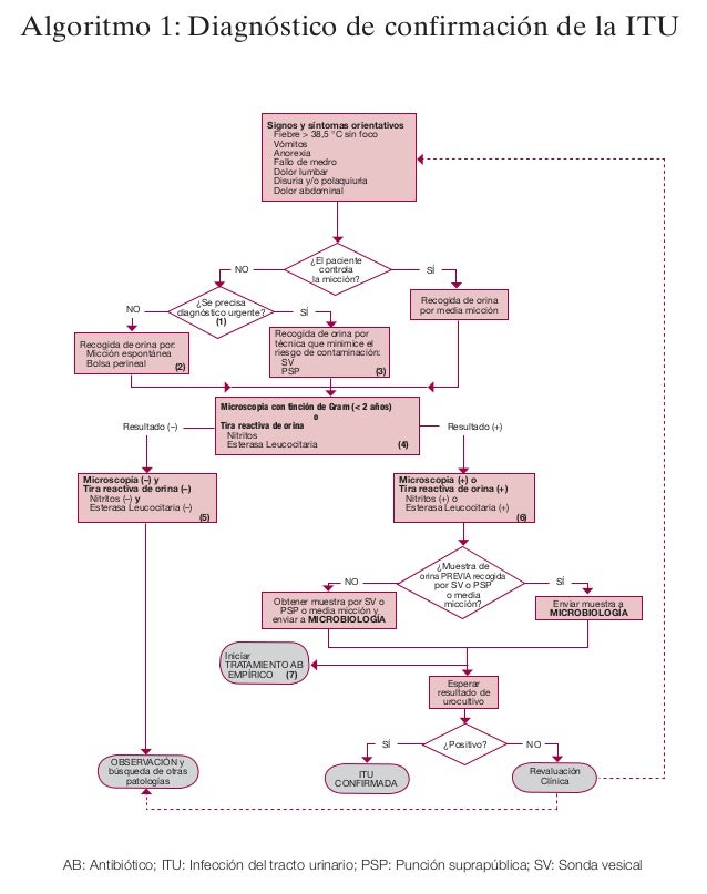 19. Estrategias diagnósticas    y terapéuticasAlgoritmo 1: Diagnóstico de confirmación de la ITU                          ...