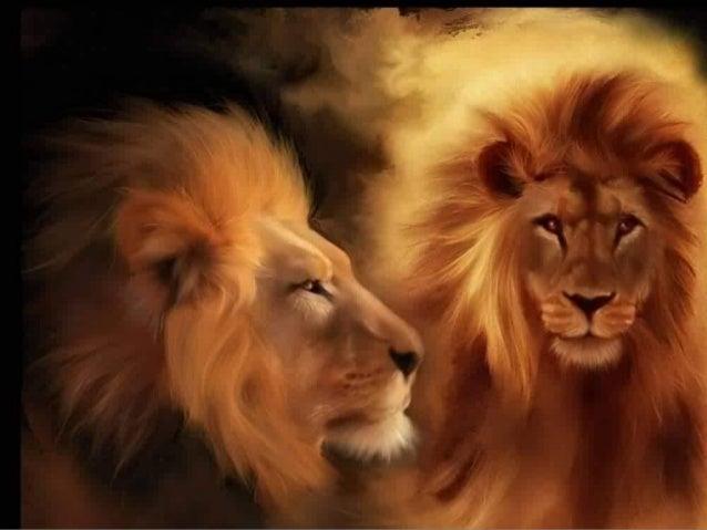 Kevin Richardson Il a établi un incroyable trait d'union de confiance avec les grands félins. Que se soient les Léopards, ...