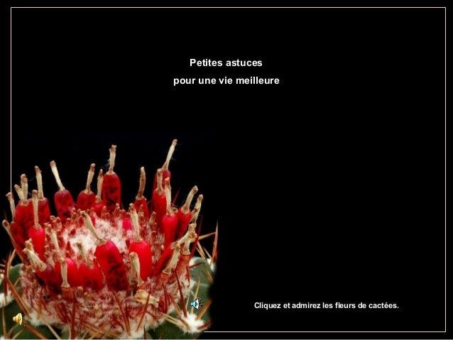 Petites astucesPetites astucespour une vie meilleurepour une vie meilleureCliquez et admirez les fleurs de cactées.
