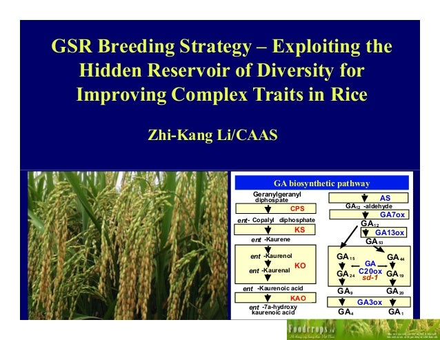 GSR Breeding Strategy – Exploiting the  Hidden Reservoir of Diversity for  Improving Complex Traits in Rice          Zhi-K...
