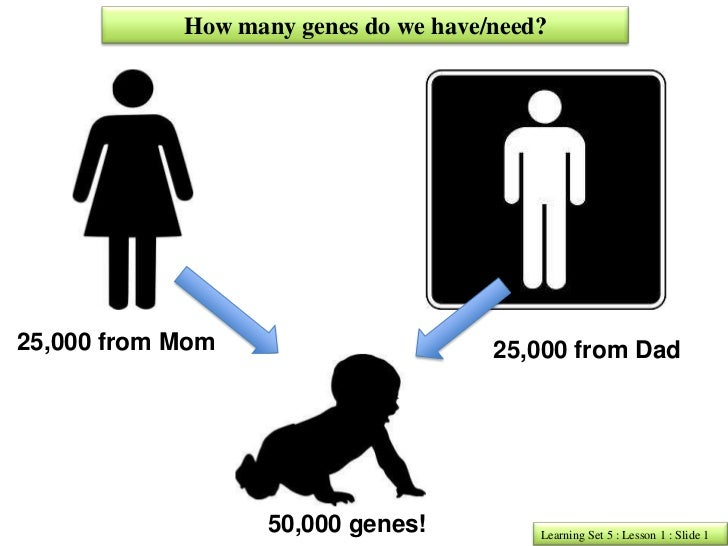 How many genes do we have/need?25,000 from Mom                       25,000 from Dad                   50,000 genes!      ...