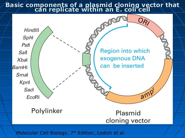 molecular cell biology lodish 7th edition pdf