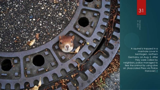 31         A squirrel is trapped in a                manhole cover in             Isenhagen, northern      Germany, on Aug...
