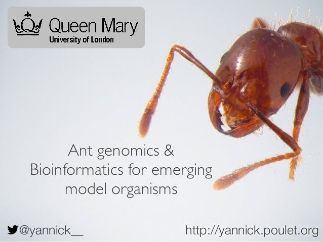 Ant genomics & Bioinformatics for emerging model organisms @yannick__  http://yannick.poulet.org