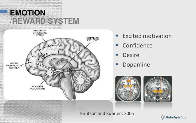 EMOTION /REWARD SYSTEM      Excited motivation Confidence Desire Dopamine  Knutson and Kuhnen, 2005