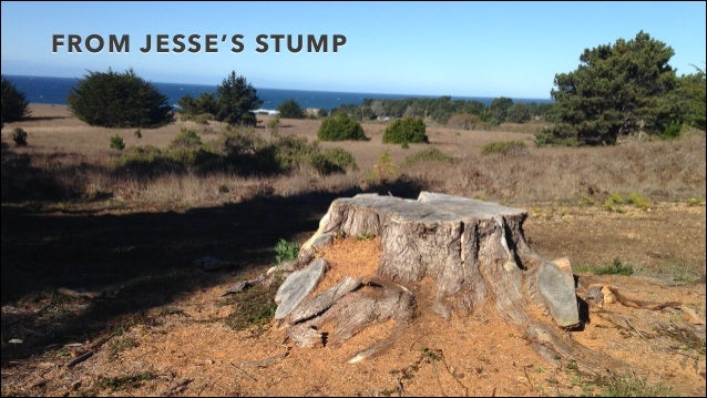 FROM JESSE'S STUMP