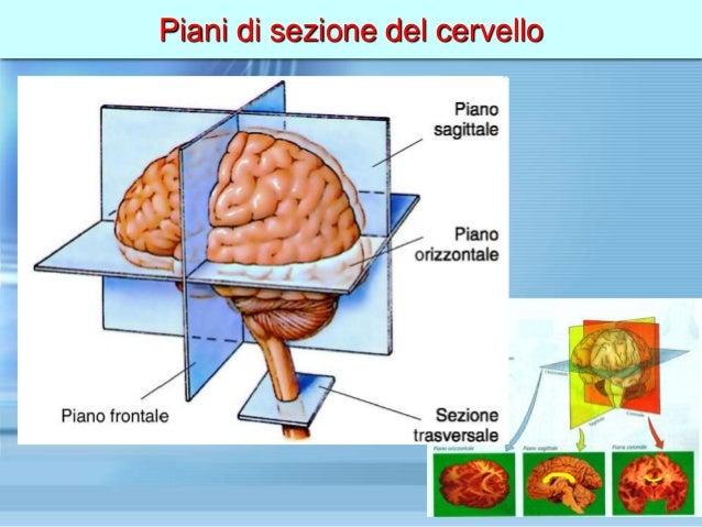 for Piani di cupola pdf