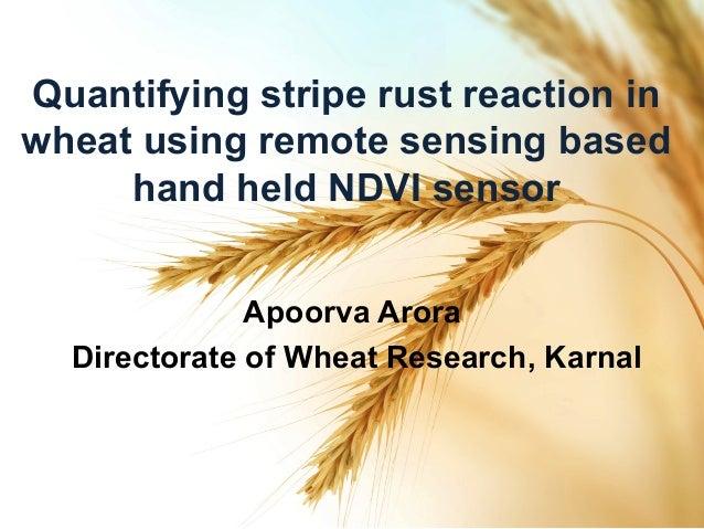 Quantifying stripe rust reaction in wheat using remote sensing based hand held NDVI sensor Apoorva Arora Directorate of Wh...