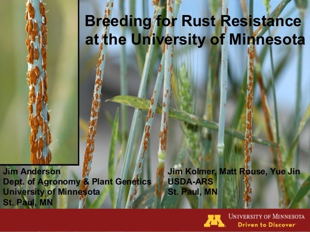 Breeding for Rust Resistance at the University of Minnesota   Jim Anderson Dept. of Agronomy & Plant Genetics University ...