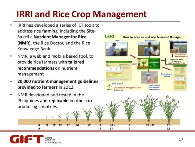 How to start a rice milling business