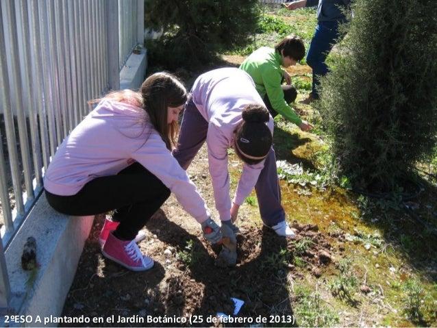 2ºESO A plantando en el Jardín Botánico (25 de febrero de 2013)