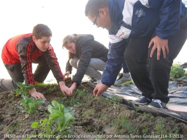 1ºESO en el Taller de Horticultura Ecológica impartido por Antonio Torres González (14-3-2013)