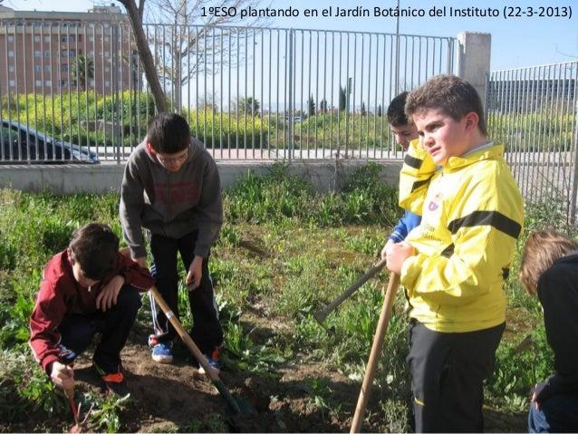 1ºESO plantando en el Jardín Botánico del Instituto (22-3-2013)