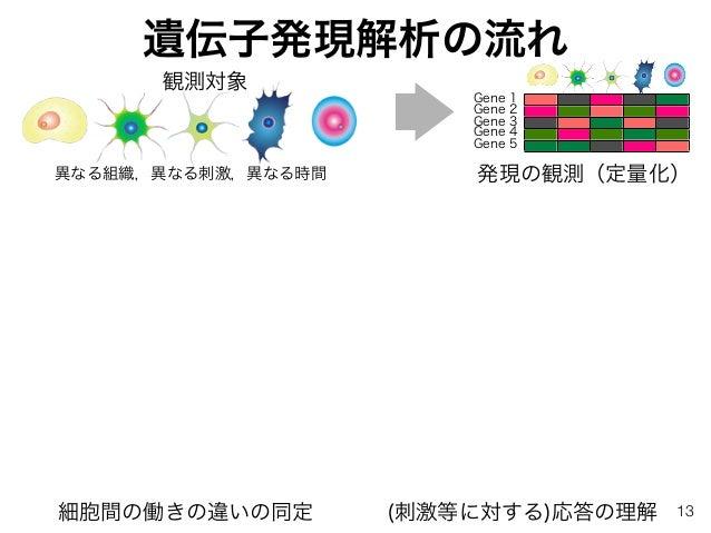 遺伝子発現解析の流れ 発現の観測(定量化)異なる組織,異なる刺激,異なる時間 Gene 1 Gene 2 Gene 3 Gene 4 Gene 5 細胞間の働きの違いの同定 (刺激等に対する)応答の理解 観測対象 13