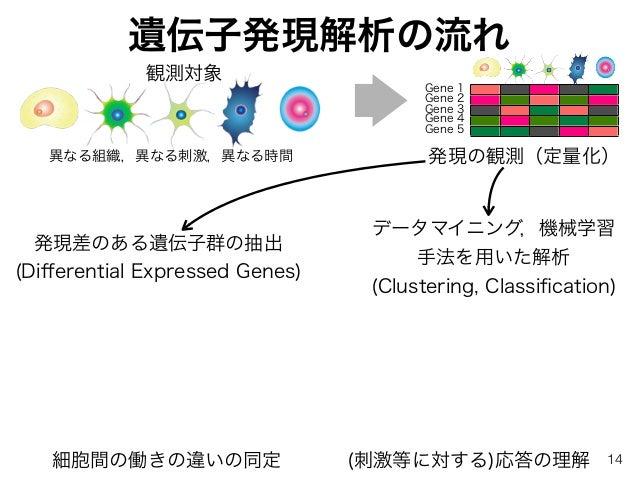 遺伝子発現解析の流れ 発現の観測(定量化)異なる組織,異なる刺激,異なる時間 発現差のある遺伝子群の抽出 (Differential Expressed Genes) データマイニング,機械学習 手法を用いた解析 (Clustering, Cla...