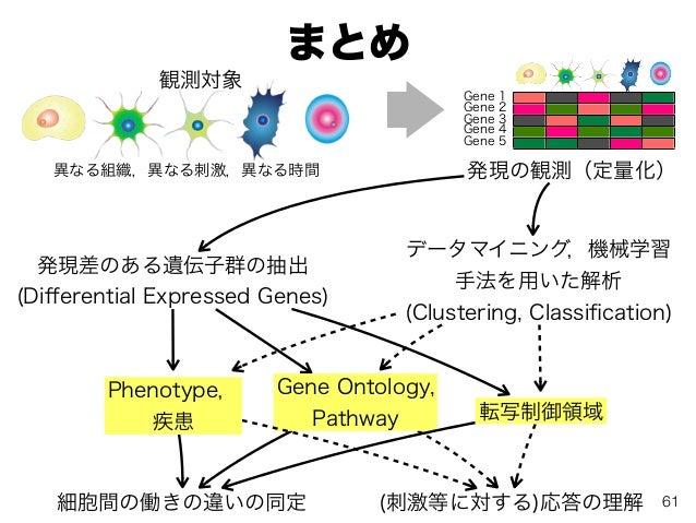 まとめ 61 発現の観測(定量化)異なる組織,異なる刺激,異なる時間 発現差のある遺伝子群の抽出 (Differential Expressed Genes) データマイニング,機械学習 手法を用いた解析 (Clustering, Classifi...