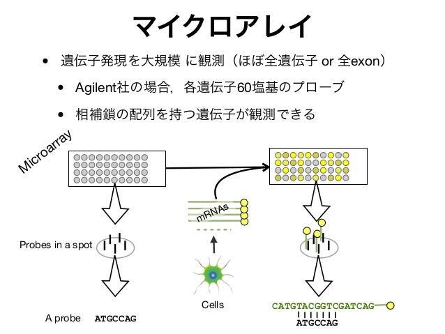 マイクロアレイ • 遺伝子発現を大規模 に観測(ほぼ全遺伝子 or 全exon) • Agilent社の場合,各遺伝子60塩基のプローブ • 相補鎖の配列を持つ遺伝子が観測できる M icroarray ATGCCAG ATGCCAG CATG...