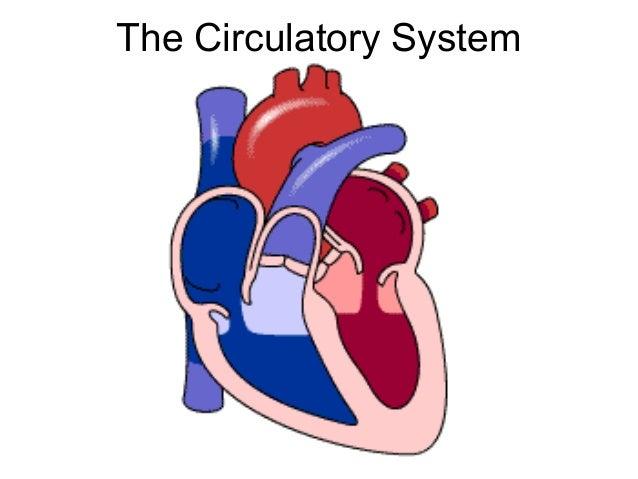 Circulatory System 33291417 further Power Point The Cardiovascular System Anatomy And Physiology further Sistemas Del Cuerpo Humano 2 in addition Jantung Adalah Panglima Bukti Ilmiah Jantung Mempengaruhi Kerja Otak Kita Bagian 1 as well Circulatory System Of Crocodile. on human circulatory system powerpoint