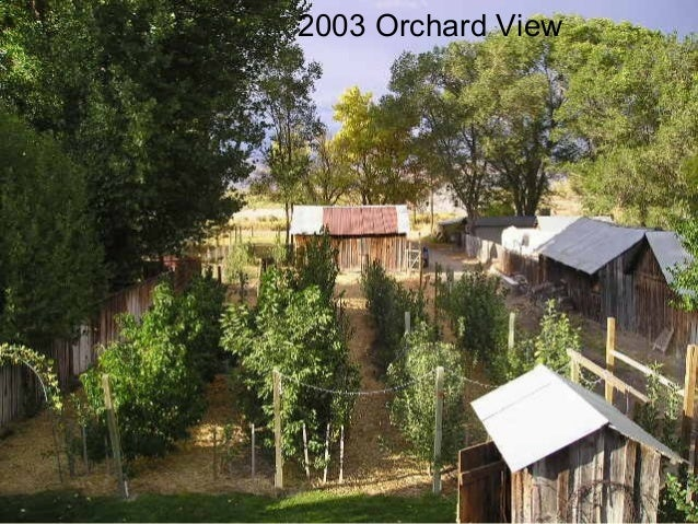 2003 Orchard View