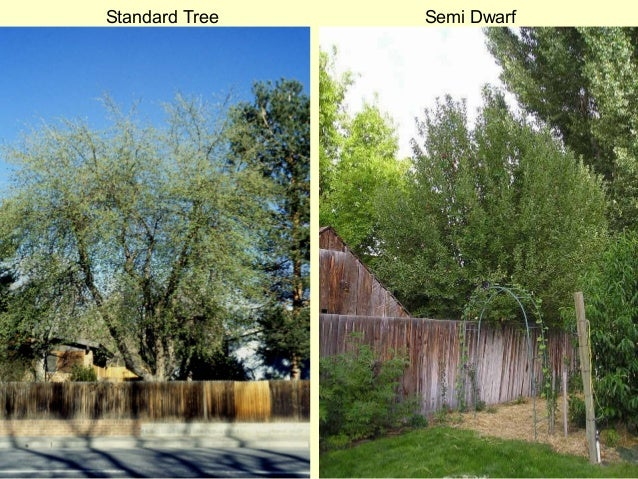 Grow Your Own Nevada Spring 2013 Growing Fruit Trees