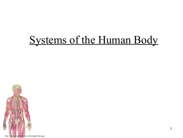 http://www.muslimworld.co.uk/images/body.jpg 1 Systems of the Human Body