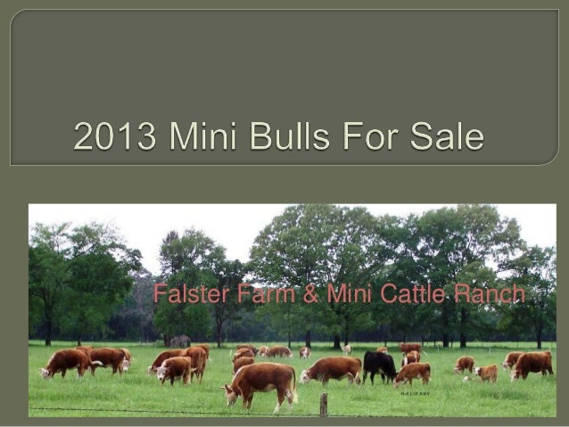Falster Farm & Mini Cattle Ranch