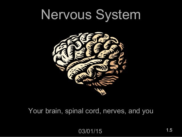 Nervous System Your brain, spinal cord, nerves, and you 03/01/15 1.5