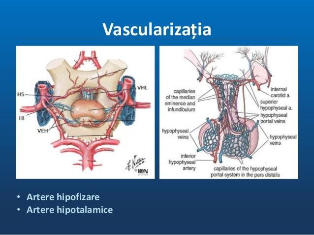 • H. stimulatori • H inhibitori • Sistem port • Hotmoni hipofizari