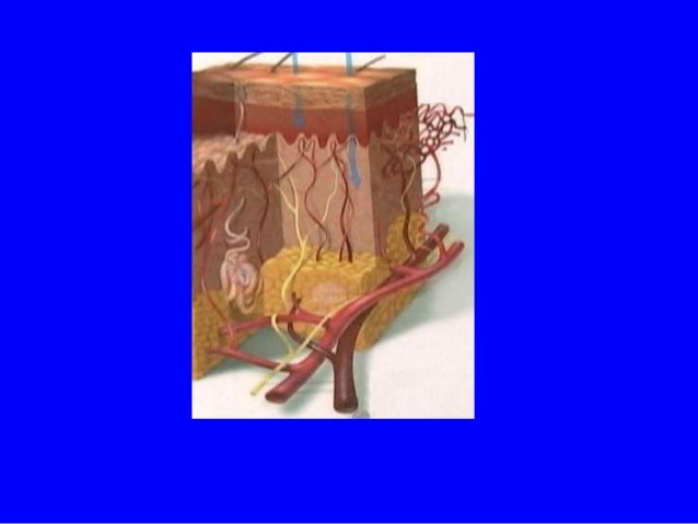 RETINOL Desventajas • Irrita la piel • Exfolia la piel • Enrojecimiento de la piel  Baumann, Leslie Cosmetic Dermatology: ...