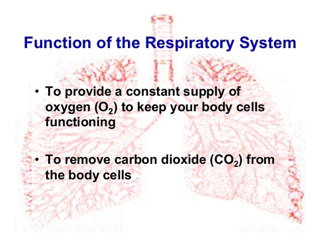 2013 Respiratory System Pdf