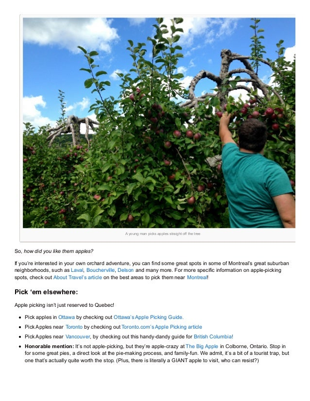A Young Man Picks Apples