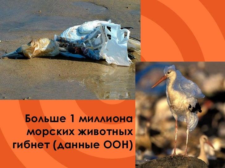 Больше 1 миллиона морских животных гибнет (данные ООН)