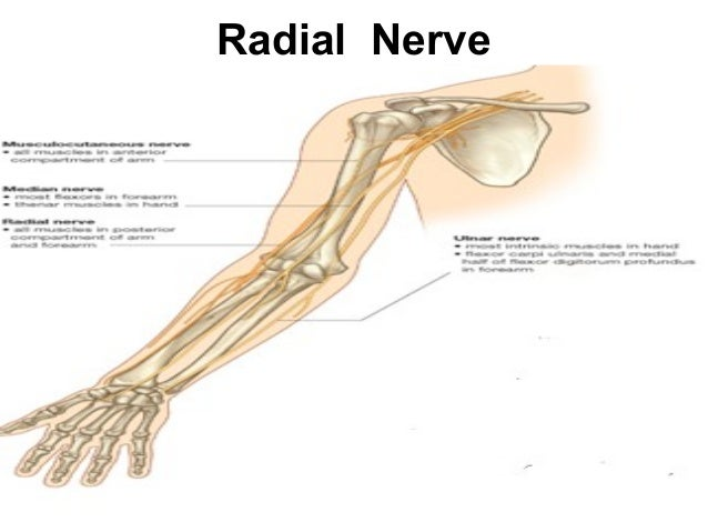 Nerve Lesions Of Upper Limb Of Laila Maboul Mahasen Morsy