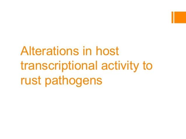 Alterations in host transcriptional activity to rust pathogens J. Briggs, J. Garbe, M. N. Rouse, J. Kurle University of Mi...