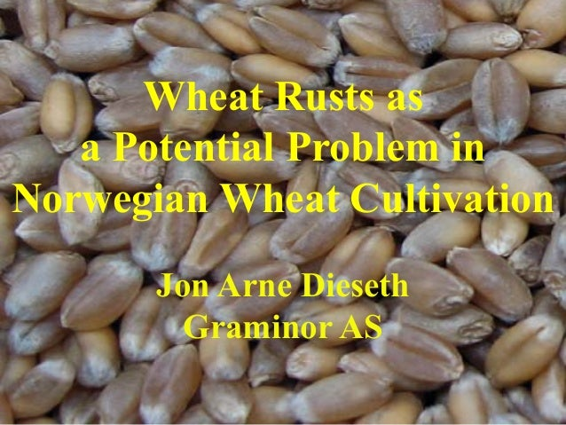 Wheat Rusts as a Potential Problem in Norwegian Wheat Cultivation Jon Arne Dieseth Graminor AS