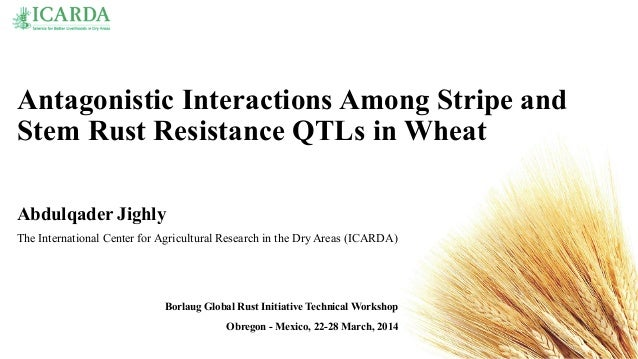 Antagonistic Interactions Among Stripe and Stem Rust Resistance QTLs in Wheat Abdulqader Jighly The International Center f...