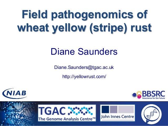 Field pathogenomics of wheat yellow (stripe) rust Diane Saunders Diane.Saunders@tgac.ac.uk http://yellowrust.com/