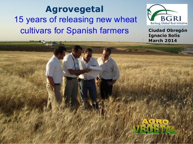 Ciudad Obregón Ignacio Solís March 2014 Agrovegetal 15 years of releasing new wheat cultivars for Spanish farmers