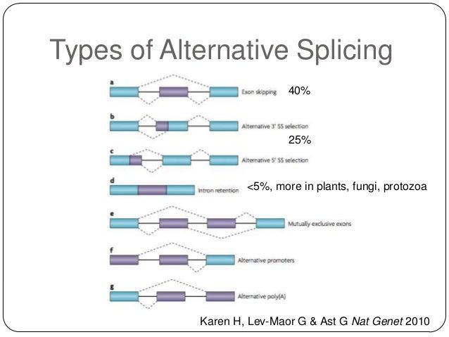 Types of Alternative Splicing 40%  25%  <5%, more in plants, fungi, protozoa  Karen H, Lev-Maor G & Ast G Nat Genet 2010
