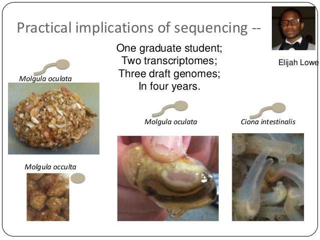 Practical implications of sequencing -Molgula oculata  One graduate student; Two transcriptomes; Three draft genomes; In f...