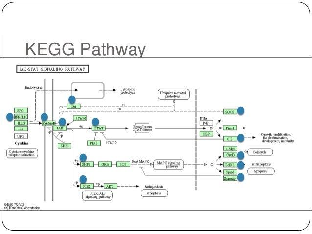 KEGG Pathway