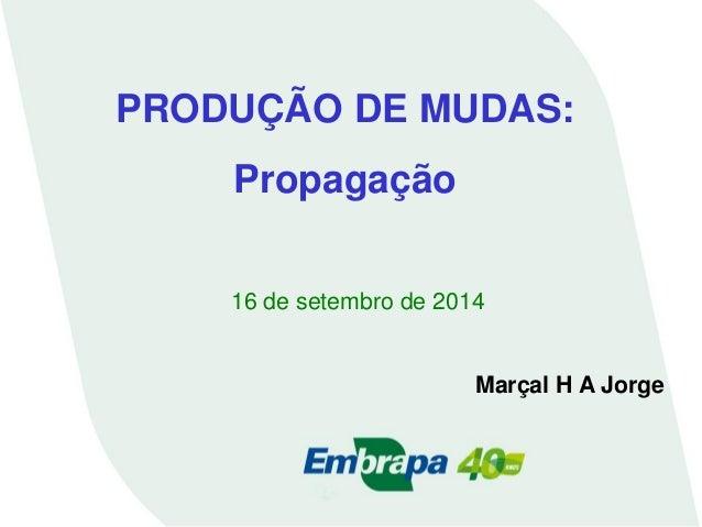 PRODUÇÃO DE MUDAS:  Propagação  16 de setembro de 2014  Marçal H A Jorge